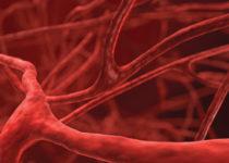Se hallan moléculas que controlan el desarrollo de los vasos sanguíneos