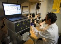 Identifican variantes genéticas que podrían triplicar el riesgo de cáncer de páncreas