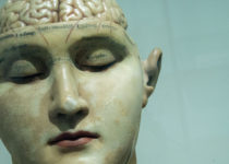 Los recuerdos se almacenan en diferentes áreas del cerebro según su antigüedad
